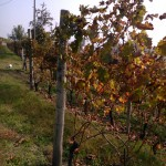 Fall shades at Francomondo Winery