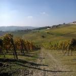 vigne Piero