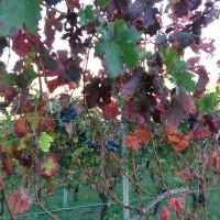 Scorci d'Autunno in Collina……..nei pressi di Francomondo